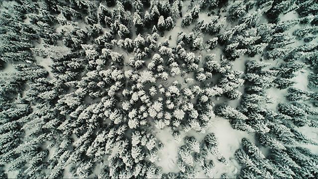 La forêt est tout le temps belle. De près, de loin, du sol ou du ciel.