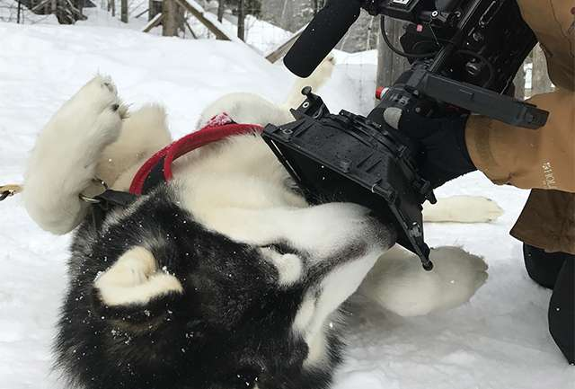 Aucun animal n'a été maltraité pendant ce tournage.